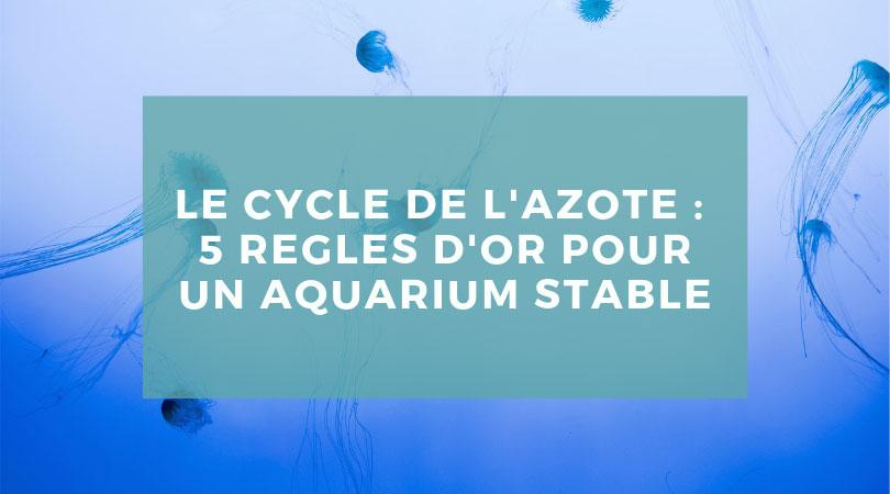 Le cycle de l'azote : 5 règles d'or pour un aquarium stable