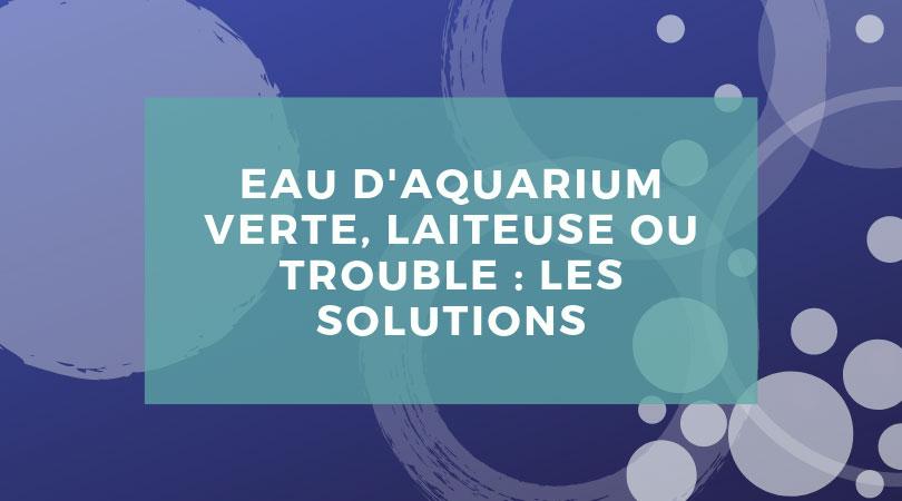 Eau d'aquarium verte, trouble ou laiteuse : les solutions